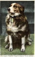 """3Th Batt Grenadiers Pet Dog """" Modder"""" Brought By The Regiment From The Battlefield RV - Chiens"""
