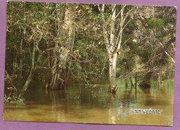 Brasil - Manaus - Selva Amazônica -  Paisagem Tipica - Manaus