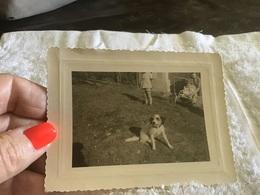 Photo Noir Et Blanc Chien Devant La Maison Filles Coupées En Short Bébé Dans Une Poussette Femme Tête Coupée - Anonyme Personen
