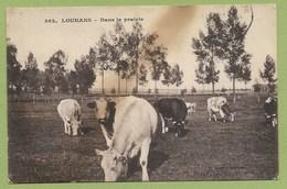 71 Saone Et Loire Louhans ( Vaches ) Env De Cuiseaux - France