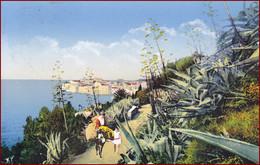 Dubrovnik (Ragusa) * Tiere, Esel, Leute, Blühender Kaktus, Strasse * Kroatien * AK2416 - Croazia