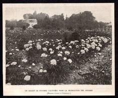 1907  --  CHATENAY MAISON CROUX CULTURE DES PIVOINES POUR LES GRAINES  . 3T197 - Vieux Papiers