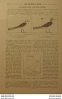 1909 LE PIGEON DANS L'NCIENNE EGYPTE - Newspapers