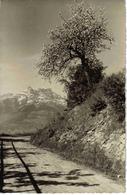 Suisse Vaud Leysin Les Dents Du Midi N°650 Photo E. Kull Territet - VD Vaud