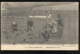 CPA Scènes Champêtres - Echaudage De La Vigne - Non Circulée - France