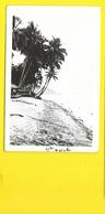 Beach (Grogan Danville) NEW GUINEA Nouvelle Guinée - Papua Nuova Guinea