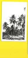 Natives (Grogan Danville) NEW GUINEA Nouvelle Guinée - Papua Nuova Guinea