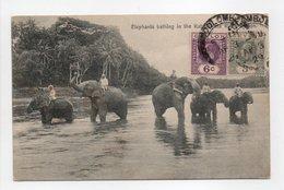 - CPA CEYLON - Elephants Bathing In The Katugastotte River (belle Animation) - Editions Plâté 250 - - Sri Lanka (Ceylon)