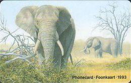 South Africa 003 Elephant - Zuid-Afrika