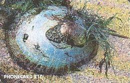 South Africa 063 Intertidal Wealth: Limpet Garden - Zuid-Afrika
