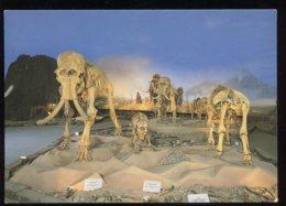 CPM Non écrite Allemagne SIEGSDORF Und Bergen Fossile Mammutwelt - Allemagne