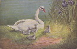 Animaux - Cygne Mère Et Petits - Illustrateur  - Fleurs Iris - Animals