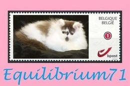 DUOSTAMP** / MYSTAMP** - Chat Persan / Perzische Kat / Persian Cat / Perserkatze - Chats Domestiques