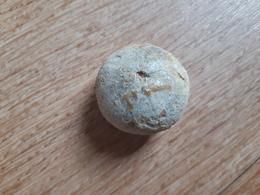 Oursin Holectypus Sarthense Du Callovien, Parcé (72) - Fossilien