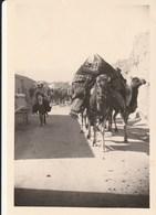 Photo 12.5 Par 8.5 Cm Caravane  A El Kantara 1952 - Other