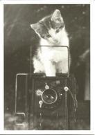 CHATS Photo  En Noir Et Blanc  Keystone (cp Double) - Chats