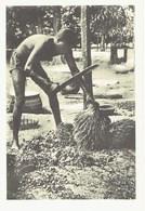 CARTE POSTALE DAHOMEY / EGRENAGE DES AMANDES - Dahomey