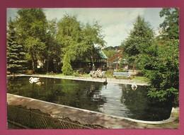 57. Saint-Avold. L'étang Des Cygnes. 1987 - Saint-Avold