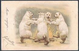 QJ049 OURS Humanisés Dansant Autour D'un FEU BEARS Belle LITHO 1901 - Bears