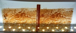 GUERRE 14-18 CHAMP DE BATAILLE APRES LE COMBAT CADAVRE MORT SOLDAT WW1 PLAQUE DE VERRE STEREOSCOPIQUE WAR L.S.U. - Diapositiva Su Vetro