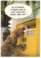 Je M'ennuie, J'espère Que Ce Mot Vous Fera Rentrer Plus Tôt - Série 877/1 - Chien Et Boîte Aux Lettres - Hunde