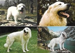 Chien Des Pyrénées - Lot De 6 Cartes Postales - Très Bon état - Dogs