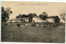 La Jemaye Domaine De Légé Le BétailDos Divisé - France