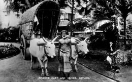 SRI LANKA (Ceylon) - Bullock Cart And Driver - RPPC - Asia
