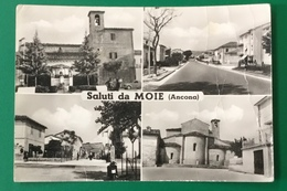 MOIE   VIAGGIATA - Ancona