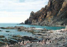 2 AK Antarctica / Antarktis * Elephant Island - Cape Lookout - Die Insel Gehört Zu Den South Shetland Islands * - Cartoline