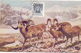 CANADA   POST CARD MAXIMUM QUEBEQ 1953  (MAGG20194) - Maximumkaarten
