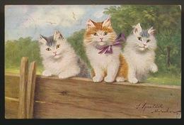 SOPHIE SPERLICH  DUITSLAND 1863 - 1906  --  KAT - KATTEN - CAT - CATS -CHAT - CHATS - Altre Illustrazioni