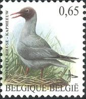 Belgium 2004 MiNr. 3320 Belgien Birds Buzin Black-headed Gull 1v  MNH** 1.80 € - Ongebruikt