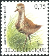 Belgium 2004 MiNr. 3321 Belgien Birds Buzin European Golden Plover 1v  MNH** 2.50 € - Ongebruikt