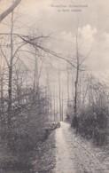 3726115Bruxelles Schaerbeek, La Vallée Josaphat (poststempel 1906) - Belgio