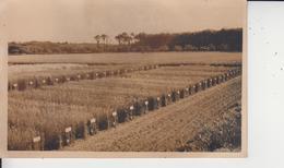 86 ROUILLE  -  Champs D'essais De L'Ecole Régionale D'Agriculture De VENOURS  - - Autres Communes