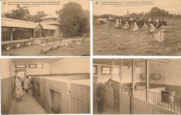 Berlaar Bij Lier, Hogere Normaalschool, Uitgever Thil Brussel -Varkensstal, Paardestal, Hoenderhok, Melken In De Weide - Berlaar