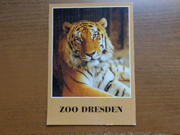 Zoo, Dierenpark / Zoo Dresden - Armurtiger -> Unwritten - Tigers