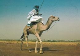 Chamelier Sur Les Rives Du Sénégal. - Mauritania