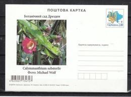 Ukraine 2020, Postkarte, Neu, Kaktus Calymmanthium / Ukraina 2020, Postcard, New, Cactus Calymmanthium - Sukkulenten