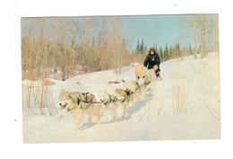 FLIN FLON, Manitoba, Canada, Dog Sled Team, Campbell's Cameras & Supplies, 1966? Chrome Postcard - Other
