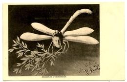 Insectes Couronnés - Reine De Hollande  - La Haye - PAX - Voir Scan - Sátiras