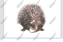 IGEL / Hedgehog / Herisson / Egel / Riccio - Andere