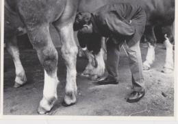 CPM LANDIVISIAU (29) - Chevaux De Trait, 1988 (photo Kervinio, Tirage 300 Ex.) - Landivisiau