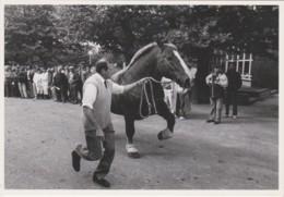 CPM LANDIVISIAU (29) - Cheval De Trait à La Parade, 1988 (photo Kervinio, Tirage 300 Ex.) - Landivisiau