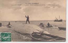 CPA (Le) Cap-Ferret, Par Arcachon - Baleine Capturée Par Des Marins à L'entrée Du Bassin (très Belle Scène) - France