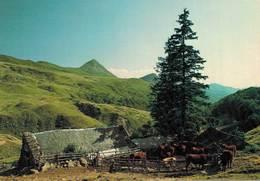 Les Monts Du Cantal Les Vaches Sont Parquées Pres Du Buron Au Loin Le Puy Griou   CPM Ou CPSM - Zonder Classificatie