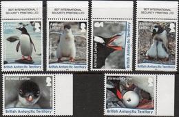 Antarctique Britannique 0686/91 Faune, Manchots, œuf - Antarctic Wildlife