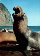 CPM - GROENLAND - ELEPHANT De MER - Edition Pub Pharma (Timbres Au Dos) - Groenlandia