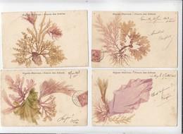 Nature / Fleurs Séchées / Lot De 4 CP / Algues Marines, Fleurs Des Greves / Années 1903 - Tarjetas De Fantasía